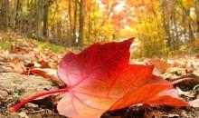 automne-b1529