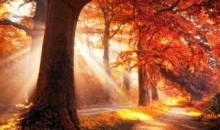 soleil-d-automne